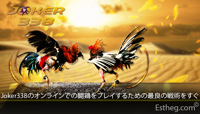 Joker338のオンラインでの闘鶏をプレイするための最良の戦術をすぐ